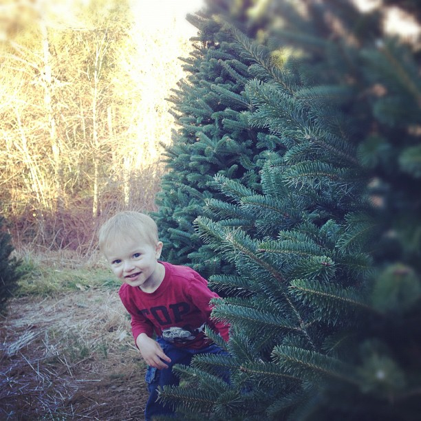Christmas Tree Search